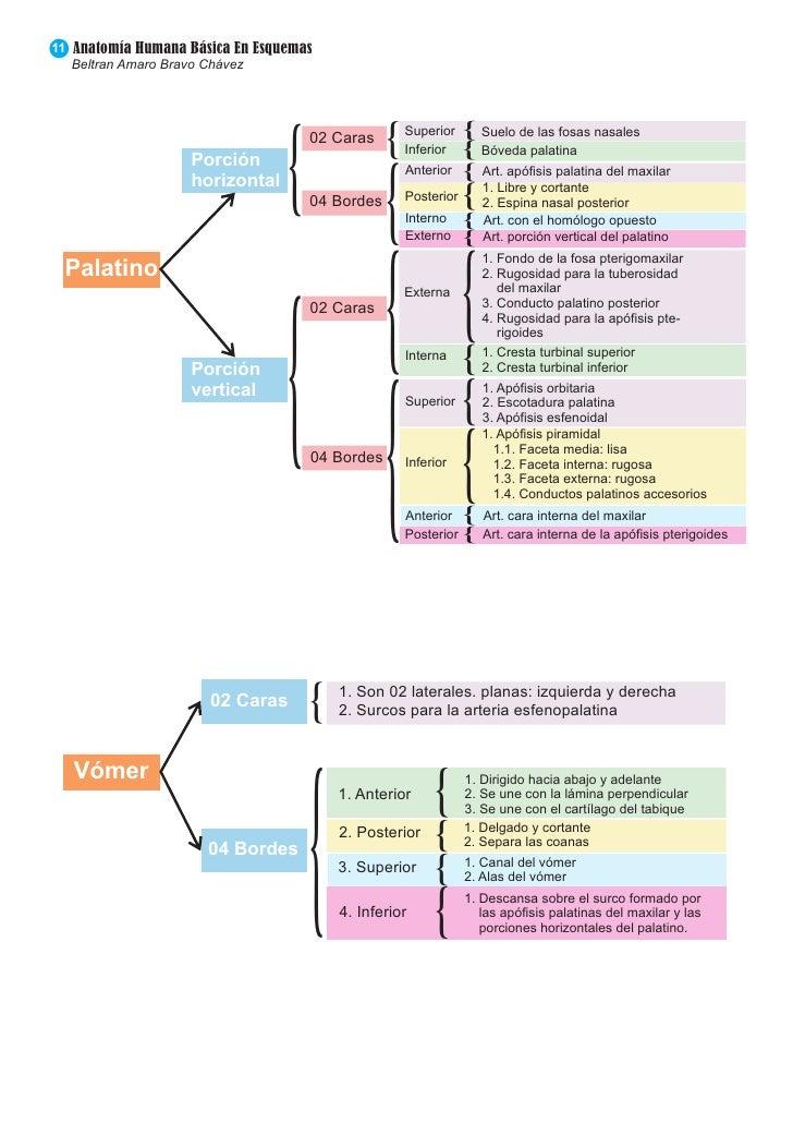 Bonito Diagrama De La Anatomía Humana Friso - Anatomía de Las ...