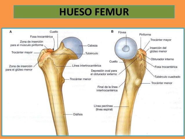 Huesos de la cadera
