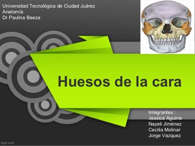 Universidad Tecnológica de Ciudad JuárezAnatomíaDr Paulina Baeza                       Huesos de la cara                  ...