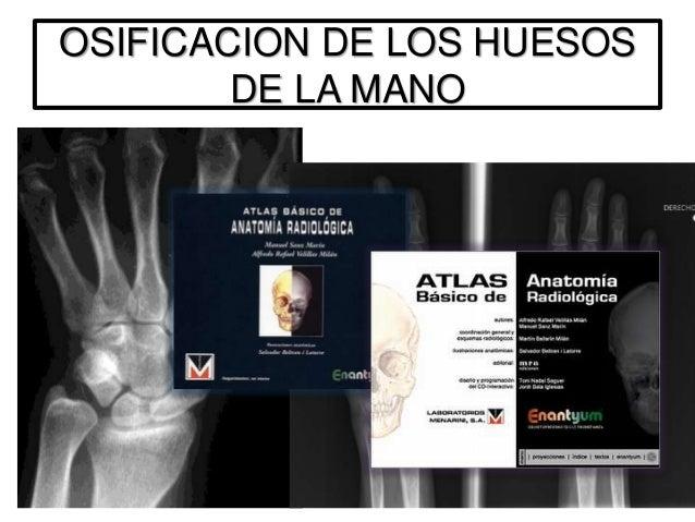ANATOMIA DE SUPERFICIE DE LOSHUESOS DEL MIEMBRO SUPERIOR