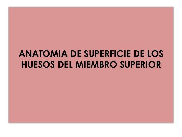 ANATOMIA DE SUPERFICIE DE LOSHUESOS DEL MIEMBRO SUPERIORClavícula