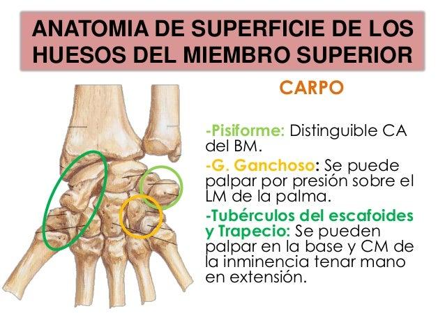 HUESOS DEL MIEMBRO SUPERIOR      -CASOS CLINICOS-LESIONES DEL MIEMBRO SUPERIOR