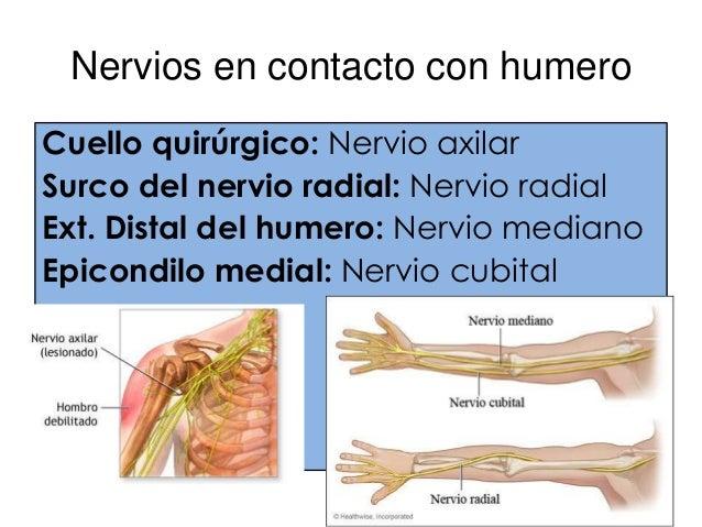 FRACTURA DEL ESCAFOIDES• Mas frecuente del carpo.• Caída sobre la palma de la mano abducida.• Dolor sobre la parte lateral...