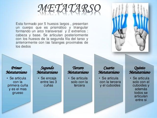 Huesos de la mano y del pie for Cuarto y quinto metatarsiano