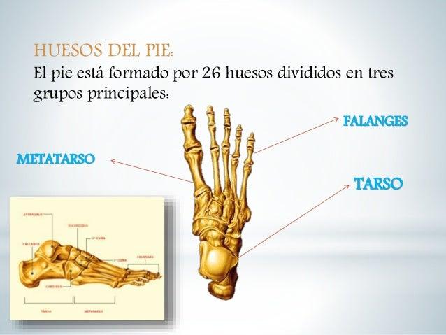 huesos-de-la-mano-y-pie-9-638.jpg?cb=1479580662