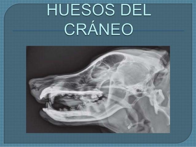 Se dividen en 2 conjuntos: - - Huesos del cráneo - - Huesos faciales - HUESOS DEL CRÁNEO - Impares: Occipital, Esfenoides ...