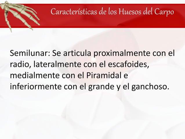 Características de los Huesos del Carpo<br />Semilunar: Se articula proximalmente con el radio, lateralmente con el escafo...