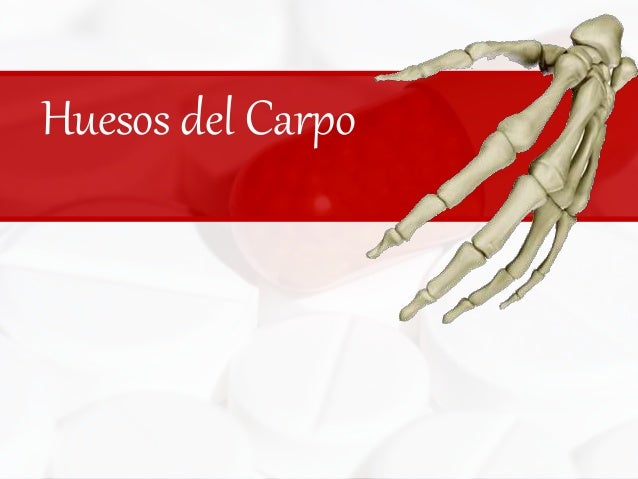 Huesos del Carpo<br />