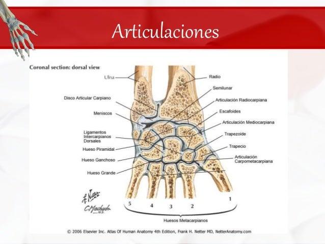 huesos-del-carpo-23-638.jpg?cb=1422651836