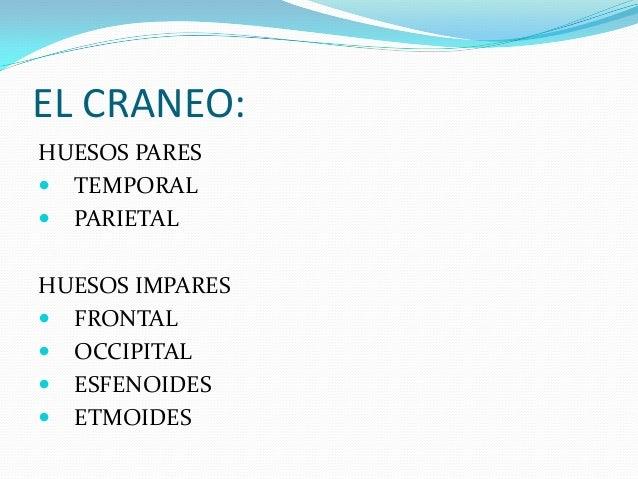 HUESOS DEL CRANEO Slide 2