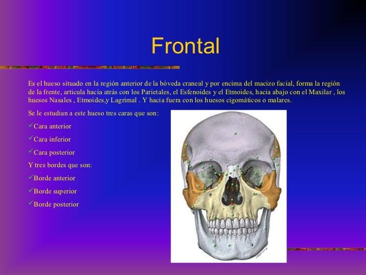 Huesos del craneo y cara anatomia