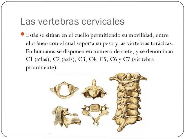 Huesos del cuello