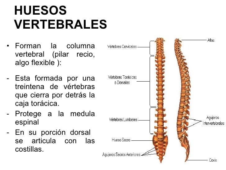 Huesos del cuerpo
