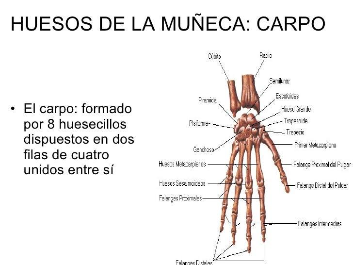 Perfecto Los Huesos De La Muñeca Fotos - Anatomía de Las Imágenesdel ...