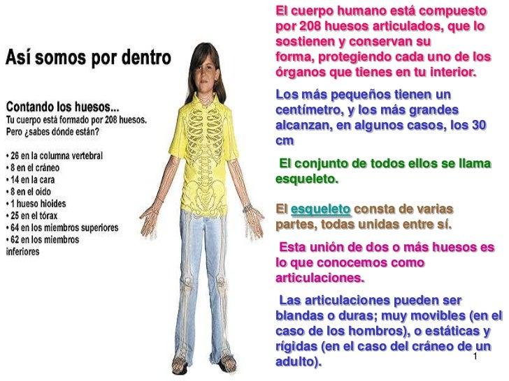 1<br />El cuerpo humano está compuesto por 208 huesos articulados, que lo sostienen y conservan su forma, protegiendo cada...