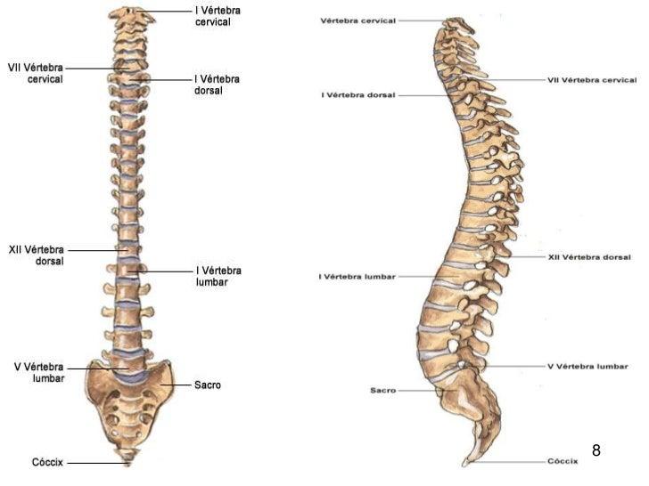 huesos del cuerpo humano 9 728