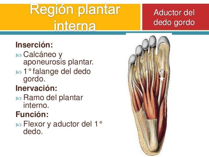 Vistoso Anatomía De Los Dedos Del Pie Patrón - Anatomía de Las ...