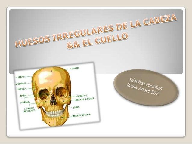 Existen varios tipos  de huesos:  •Huesos largos.  •Huesos cortos.  •Huesos planos.  •Huesos irregulares.  •Huesos sesamoi...