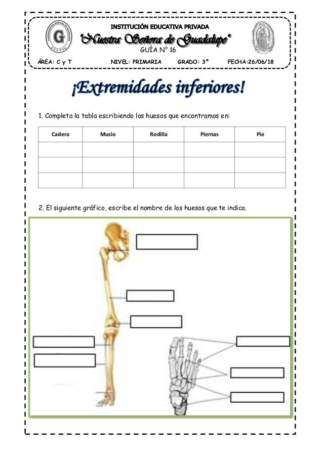 Huesos pierna