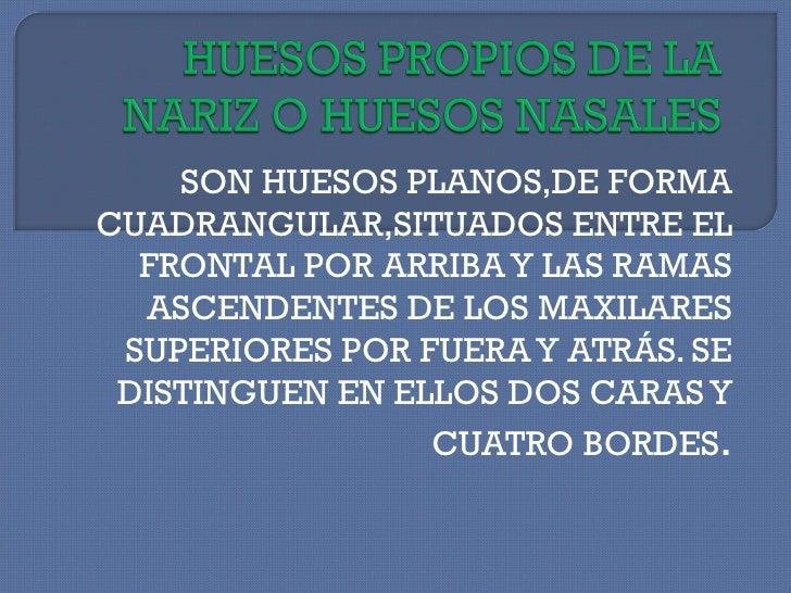 SON HUESOS PLANOS,DE FORMA CUADRANGULAR,SITUADOS ENTRE EL FRONTAL POR ARRIBA Y LAS RAMAS ASCENDENTES DE LOS MAXILARES SUPE...