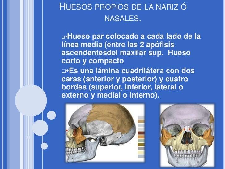 Huesos propios de la nariz