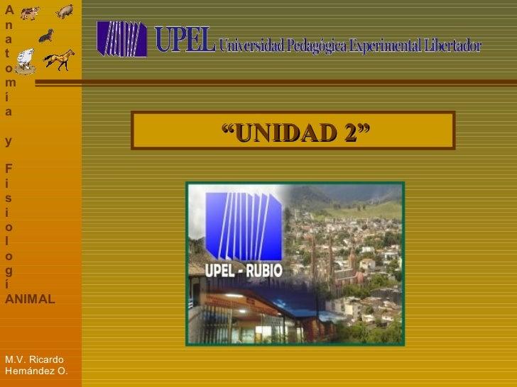 """"""" UNIDAD 2"""""""