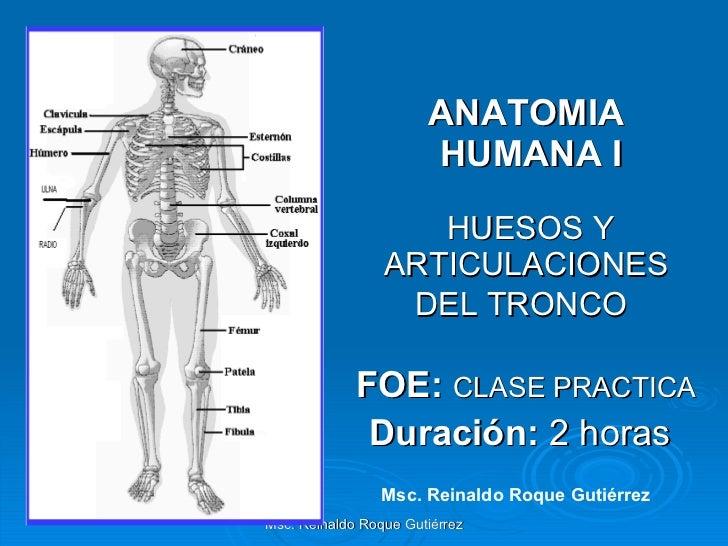 ANATOMIA  HUMANA I   HUESOS Y ARTICULACIONES DEL TRONCO   FOE:  CLASE PRACTICA Duración:  2 horas   Msc. Reinaldo Roque Gu...