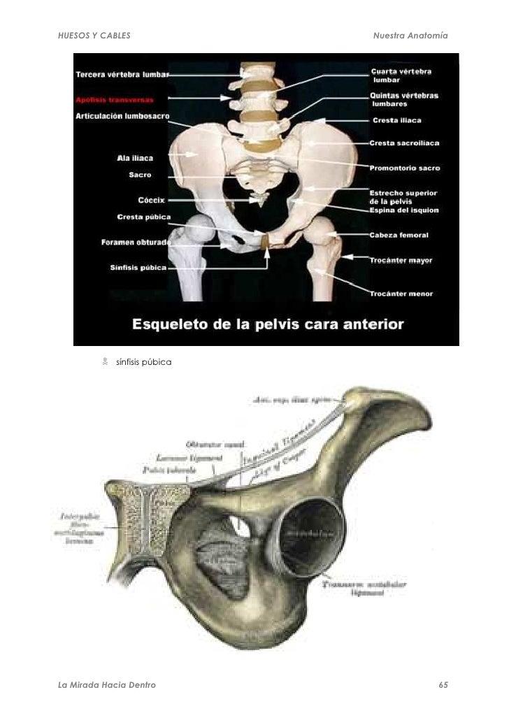 huesos-y-cables-65-728.jpg?cb=1318396466