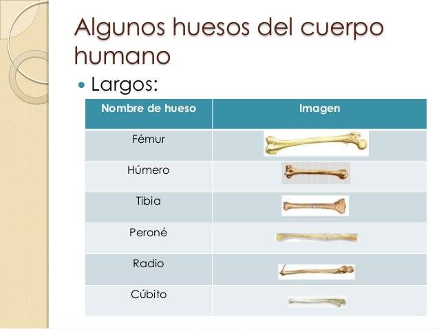 huesos y msculos del cuerpo humano 2 638