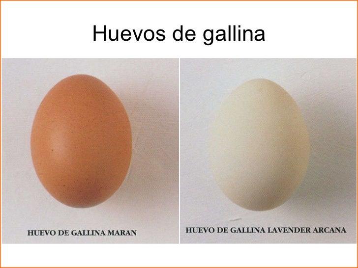 Huevos for Huevo en el ano
