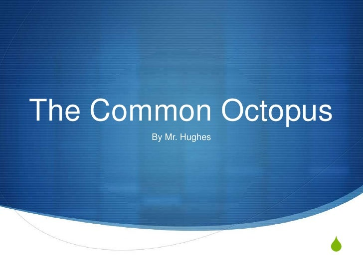 The Common Octopus       By Mr. Hughes                       S