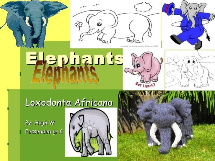 Elephants Loxodonta Africana By: Hugh W Fessenden gr.6 Elephants