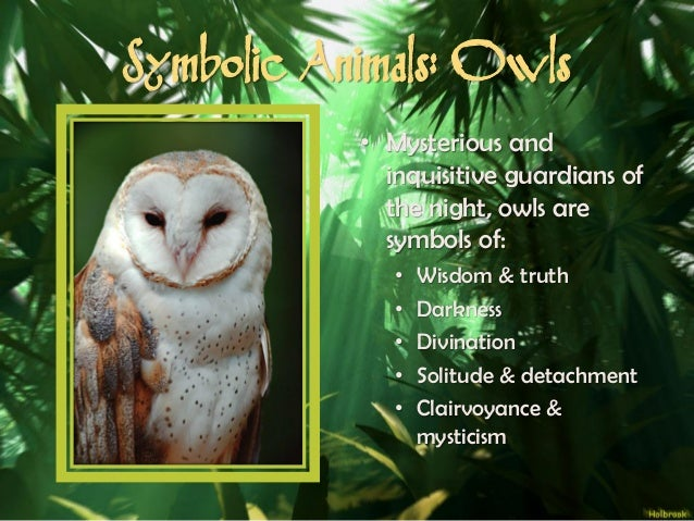 Owl Symbolism Meaning Spirit Totem Power The Owl And Its Many