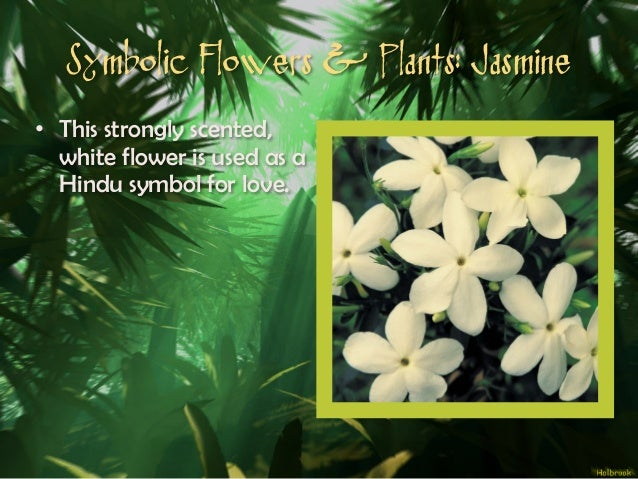 Hum2310 mythological meanings unmasked decoding the symbolism of my symbolic flowers plants jasmine 29 mightylinksfo