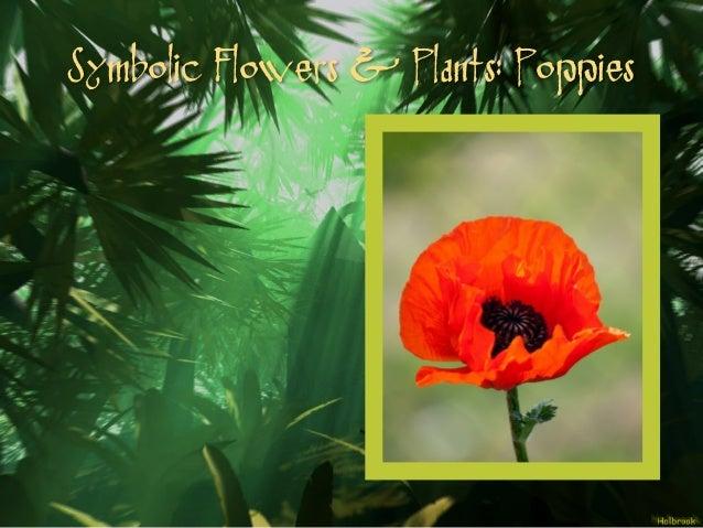 Hum2310 mythological meanings unmasked decoding the symbolism of my symbolic flowers plants poppies mightylinksfo