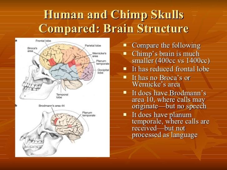 Human Biological And Cultural Evolution