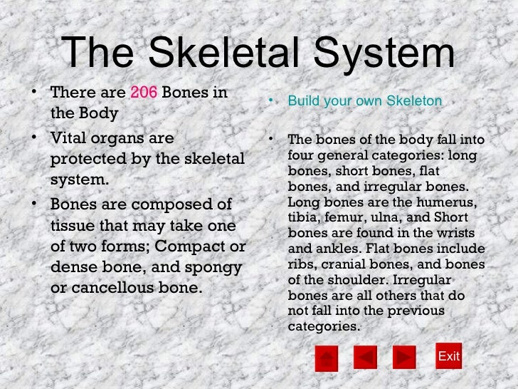 the human body system, Muscles