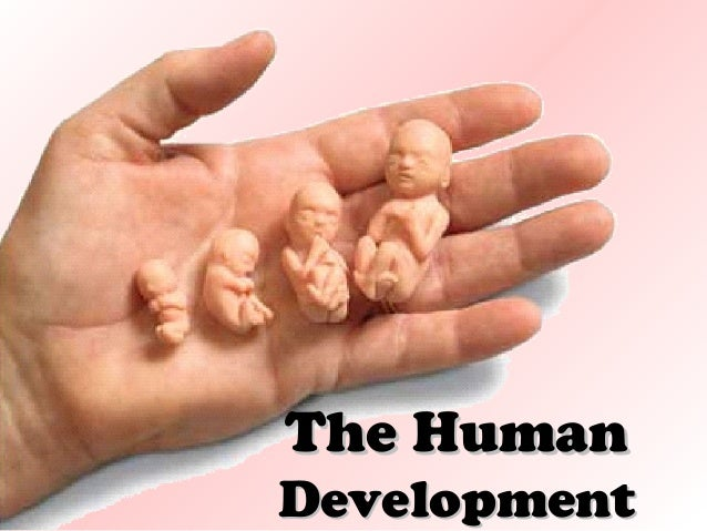 The Human  Development