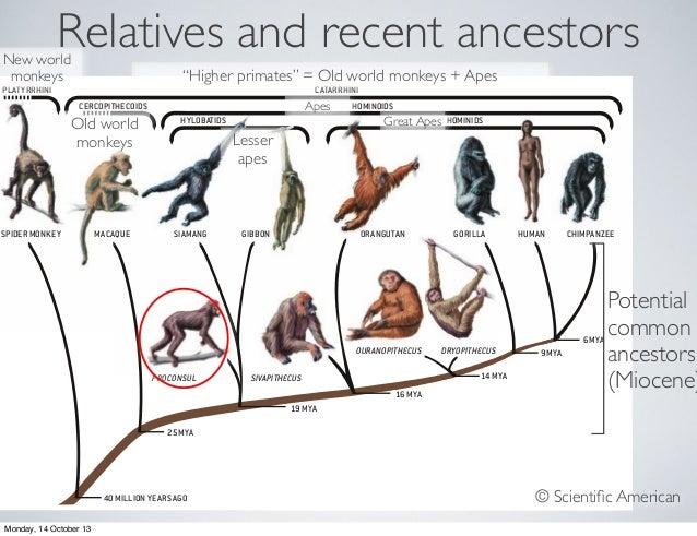 Evolution - Week 4: Human evolution