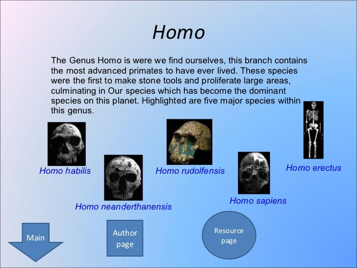 Ppt human evolution powerpoint presentation id:2637834.