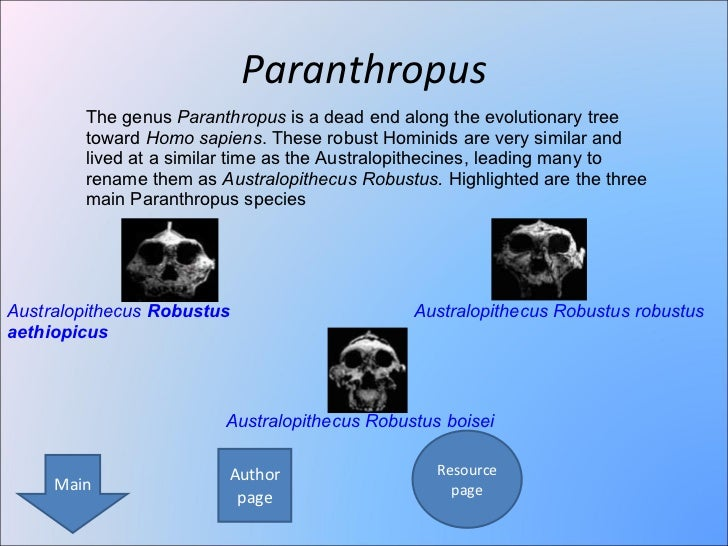 Hominin evolution hominin development ppt video online download.