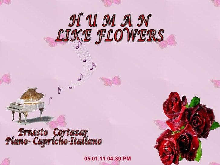05.01.11   04:33 PM H U M A N LIKE FLOWERS Ernesto  Cortazar Piano- Capricho-Italiano