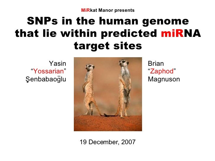"SNPs in the human genome that lie within predicted  miR NA target sites MiR kat Manor presents 19 December, 2007 Yasin "" Y..."