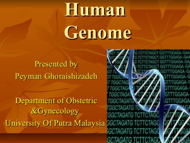 Human                Genome      Presented by  Peyman Ghoraishizadeh  Department of Obstetric       &GynecologyUniversity ...