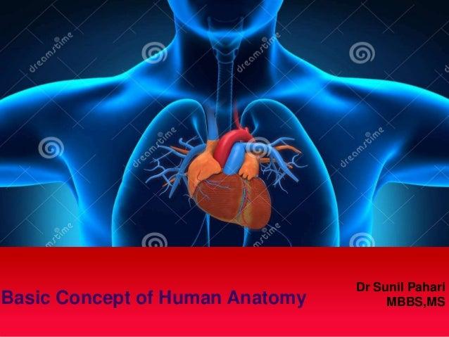 Human Anatomy Introduction