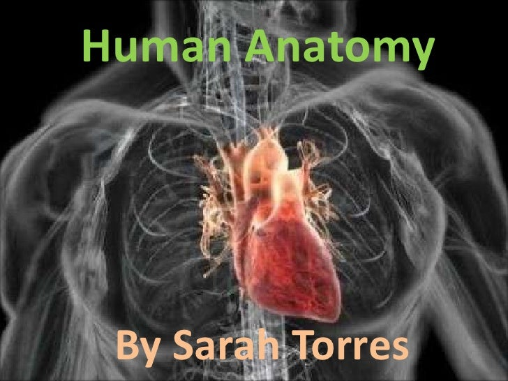 Human Anatomy<br />By Sarah Torres<br />