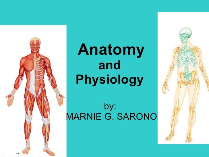 Human Body Diagram 95 Human Body Diagram 9yonddogs