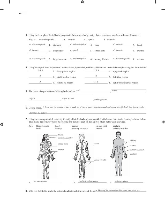 human anatomy and physiology lab manual 11th edition pdf - Dolap ...