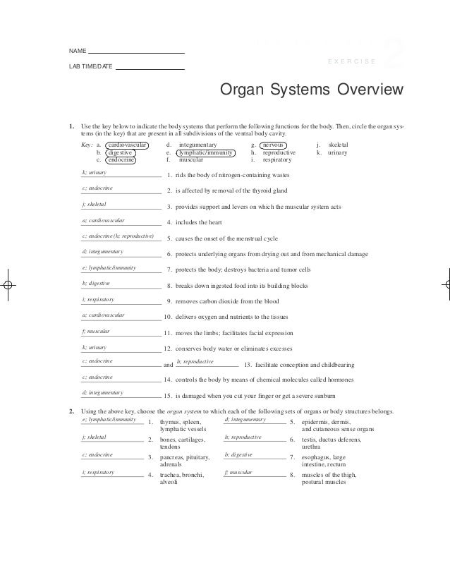 Human Anatomy And Physiology Laboratory Manual Fetal Pig