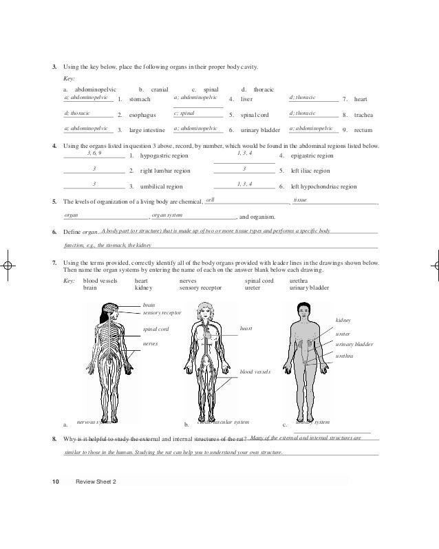 Tolle Human Anatomy And Physiology Lab Manual Answers Key Fotos ...